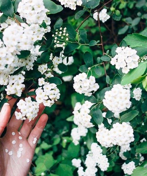 Flower plant green hand