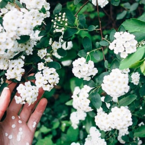 Grid flower plant green hand