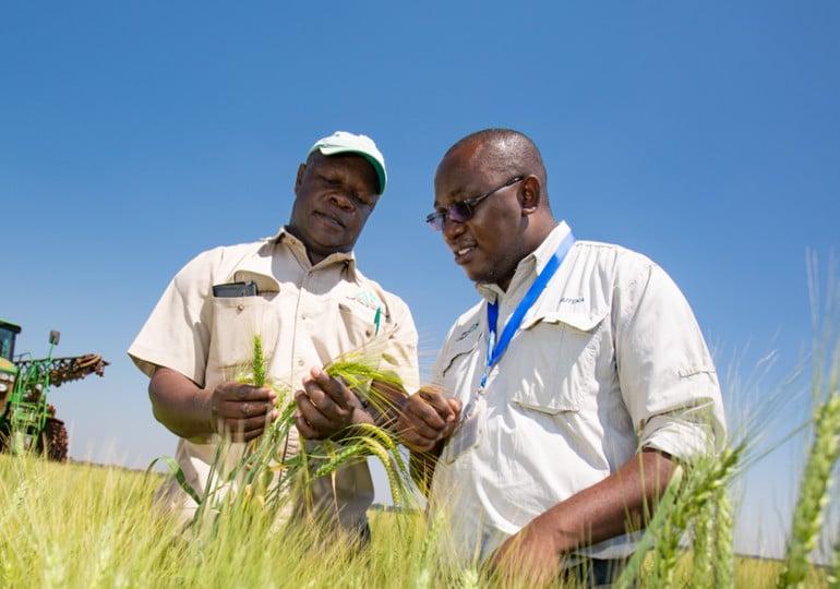 2 people looking at growing crop