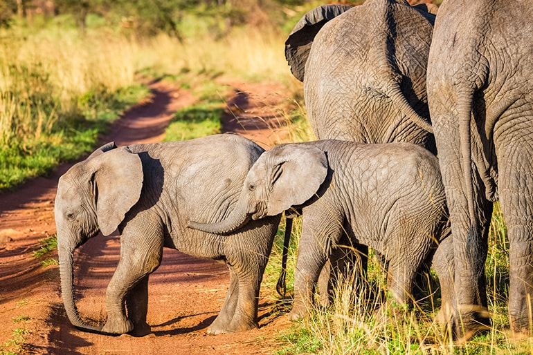 Elephants standing together