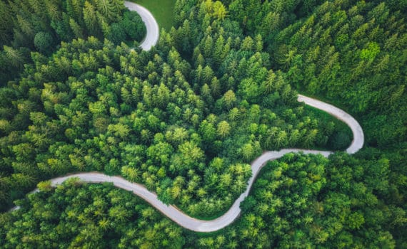 Aerial shot of green trees with a winding road