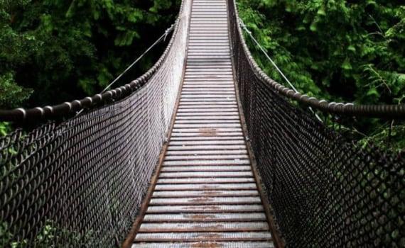 Rope bridge in trees
