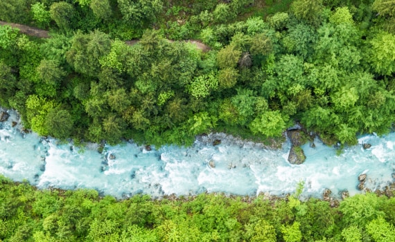 birds eye view of river in a forest