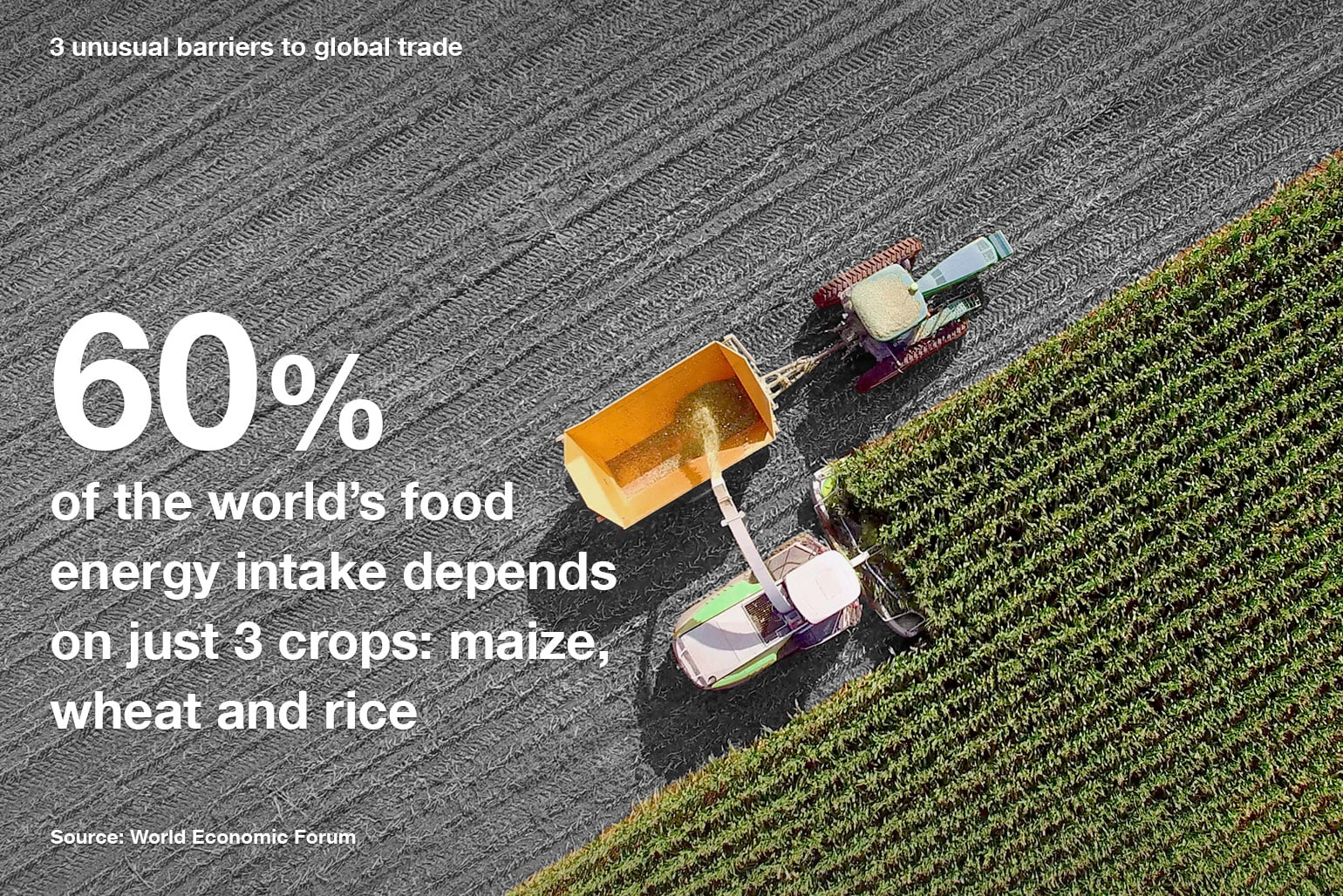60% of the world's food energy intake depends on 3 crops