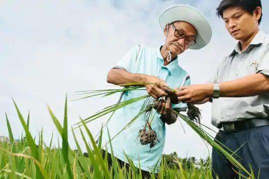 Person, Human, Grass