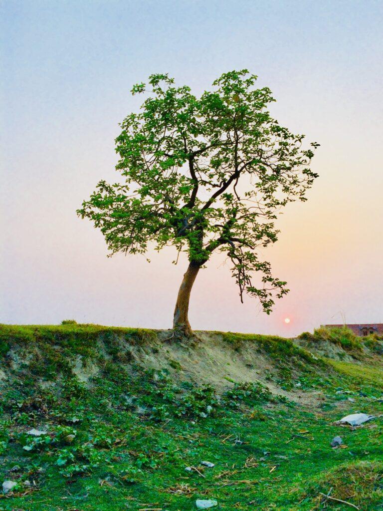 Tree, Plant, Tree Trunk