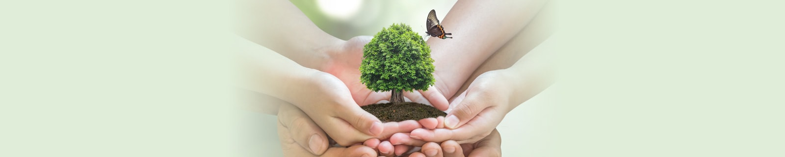 hands holding a small tree and a butterfly flying above