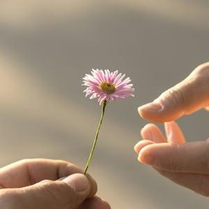 Hk wealth accumulation giving flower en