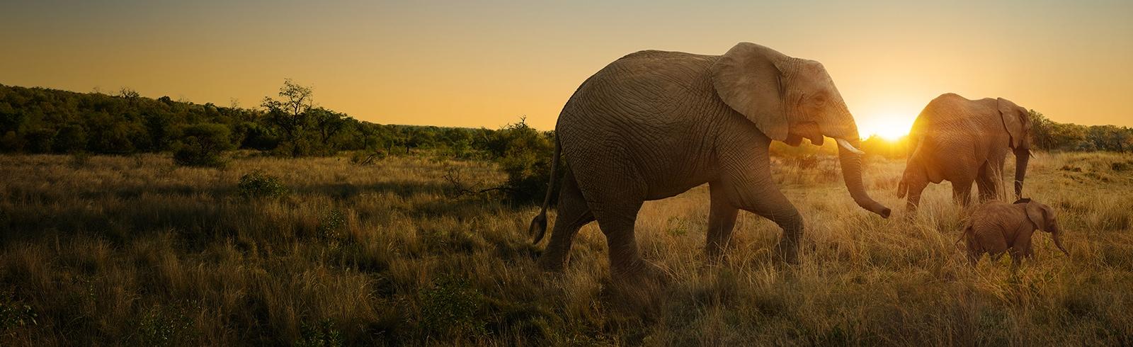 Hk sunset elephants superless