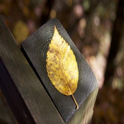 一塊半枯萎的樹葉在木頭上
