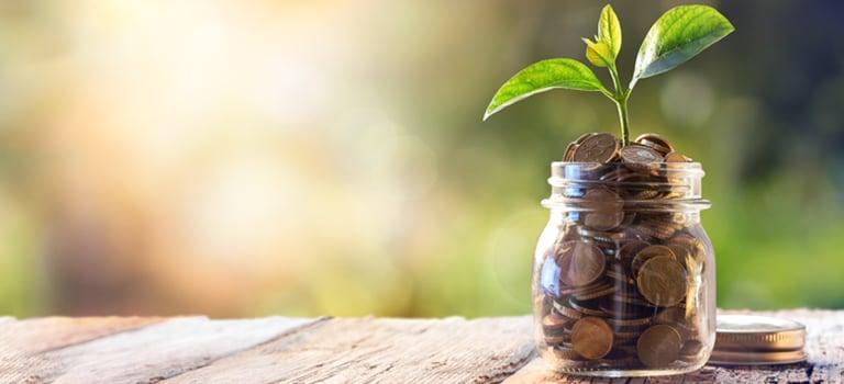Plant, Jar, Leaf