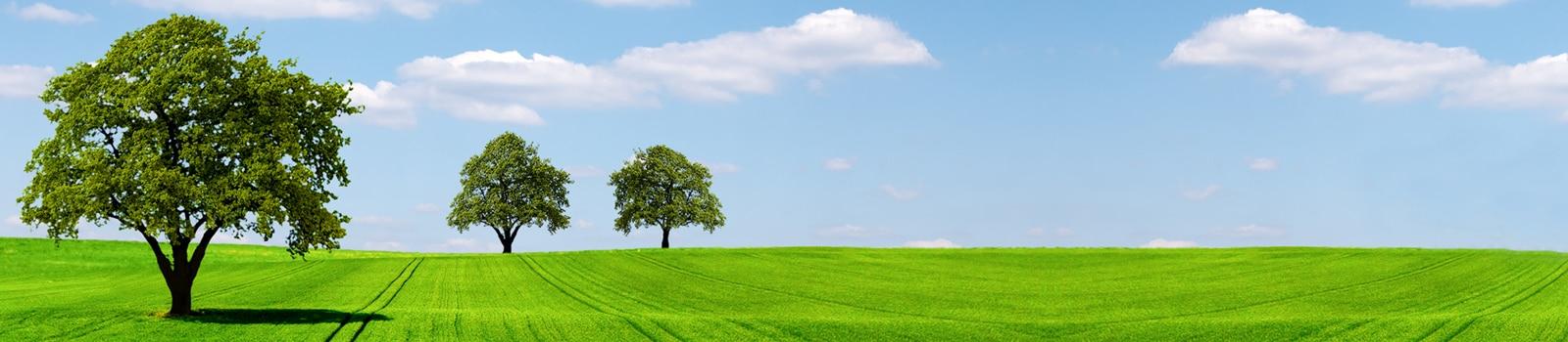 Tree, Plant, Oak