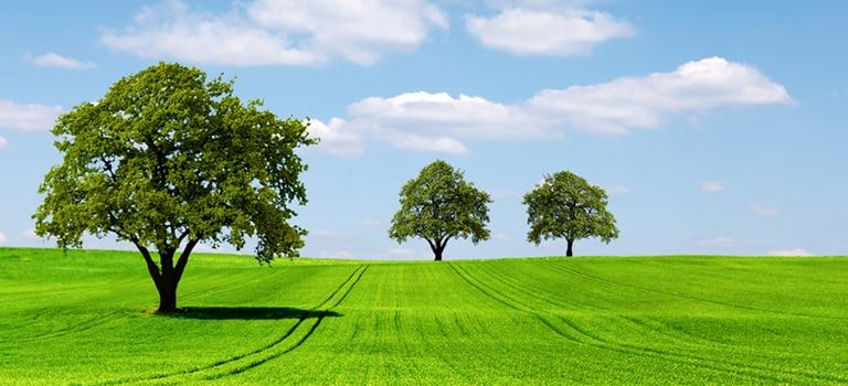 Grass, Plant, Tree