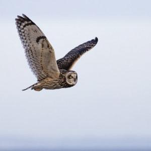 High soar fly free