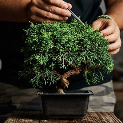 Potted Plant, Vase, Plant