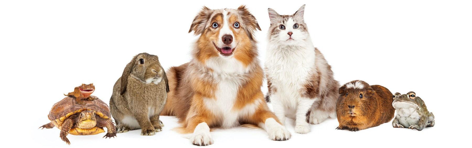 Dog, Pet, Animal