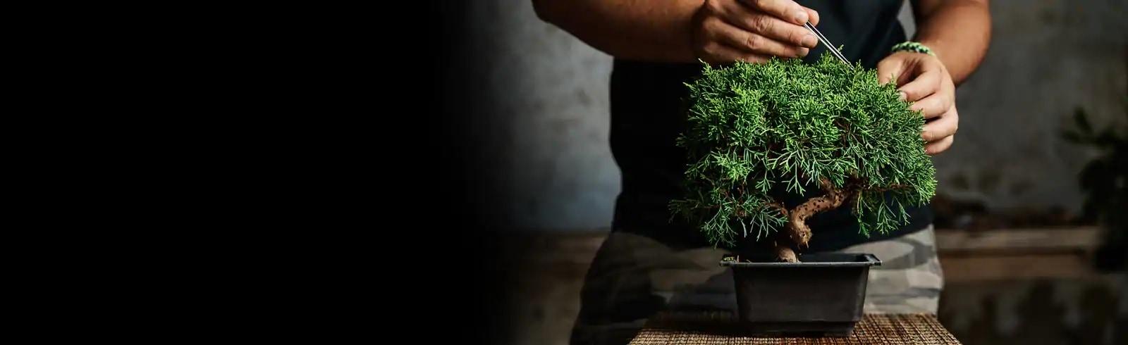 Plant, Person, Human