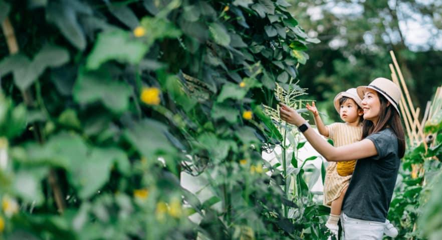 Outdoors, Garden, Person